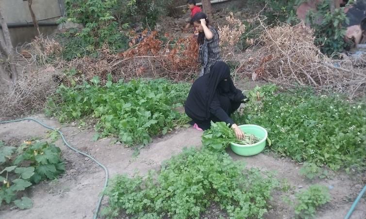 سمر تؤمن لأيتامها الغذاء الصحي ومصدر معيشة دائمة بتعز