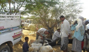 Check up for animals a